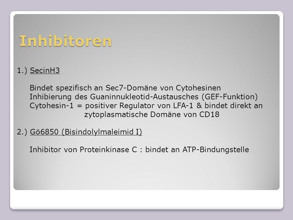 Inhibitoren 1.) SecinH3 Bindet spezifisch an Sec7-Domäne von Cytohesinen Inhibierung des Guaninnukleotid-Austausches (GEF-Funktion) Cytohesin-1 = posi