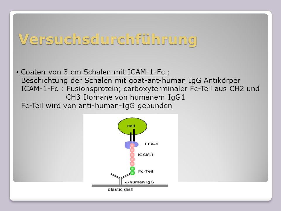 Versuchsdurchführung Vorbereitung der Zellen 1,6 × 10 7 Jurkat-Zellen Zugabe von Inhibitoren; Kontrolle nur mit DMSO 60 min Inkubation bei 37 °C Auftragen der Zellen auf Schale & Zugabe der jeweiligen Stimuli Adhäsion der Zellen für 60 min bei 37 °C Waschen der Schalen mit HBSS bis keine Zellen mehr ausserhalb der Markierung sind Zählen der Zellen