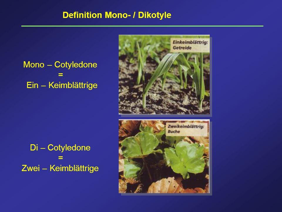 Definition Mono- / Dikotyle Mono – Cotyledone = Ein – Keimblättrige Di – Cotyledone = Zwei – Keimblättrige