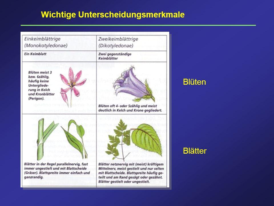 Wichtige Unterscheidungsmerkmale Blüten Blätter