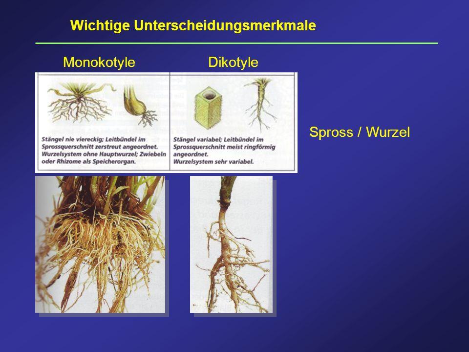 Wichtige Unterscheidungsmerkmale Monokotyle Dikotyle Spross / Wurzel