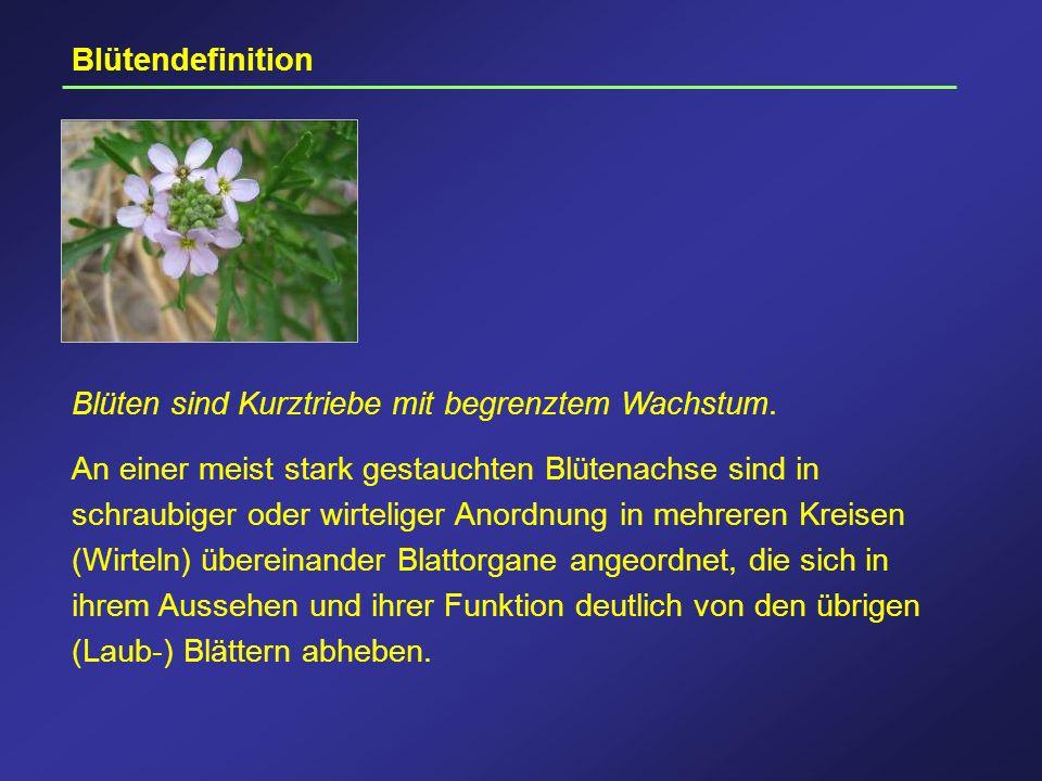 Blütendefinition Blüten sind Kurztriebe mit begrenztem Wachstum. An einer meist stark gestauchten Blütenachse sind in schraubiger oder wirteliger Anor