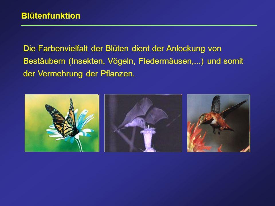 Blütenfunktion Die Farbenvielfalt der Blüten dient der Anlockung von Bestäubern (Insekten, Vögeln, Fledermäusen,...) und somit der Vermehrung der Pfla