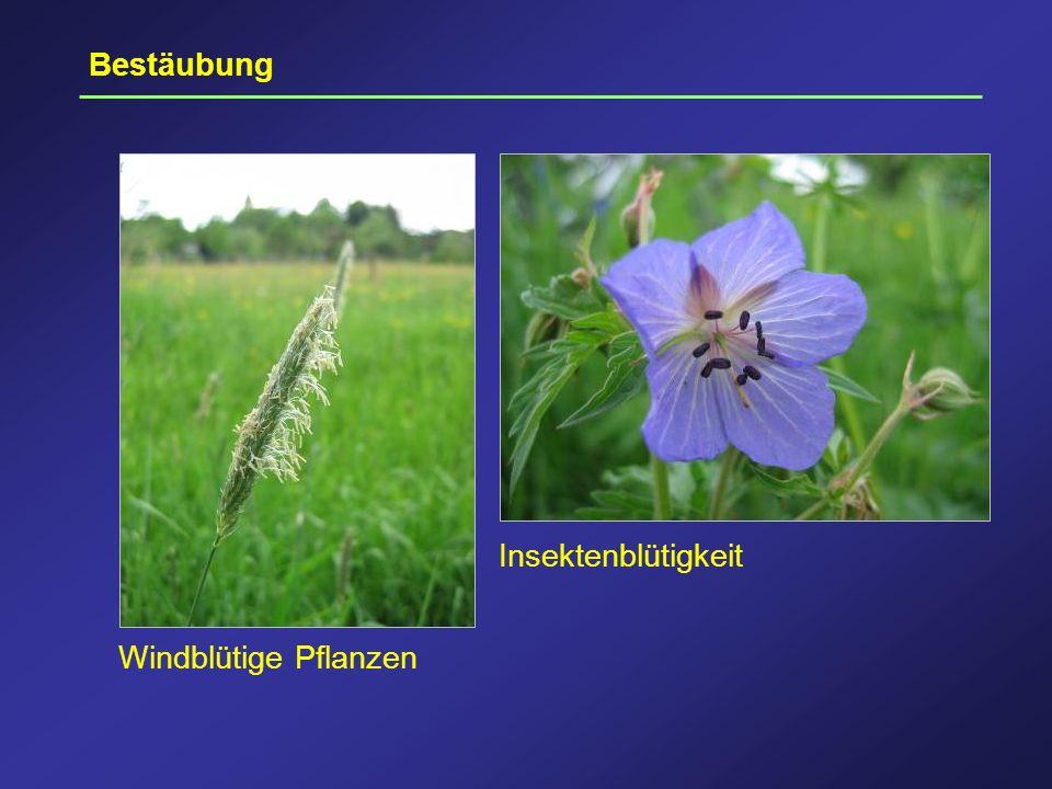 Bestäubung Windblütige Pflanzen Insektenblütigkeit