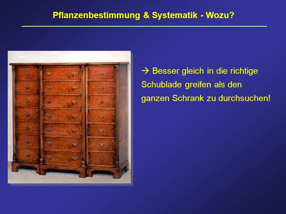 Pflanzenbestimmung & Systematik - Wozu? Besser gleich in die richtige Schublade greifen als den ganzen Schrank zu durchsuchen!