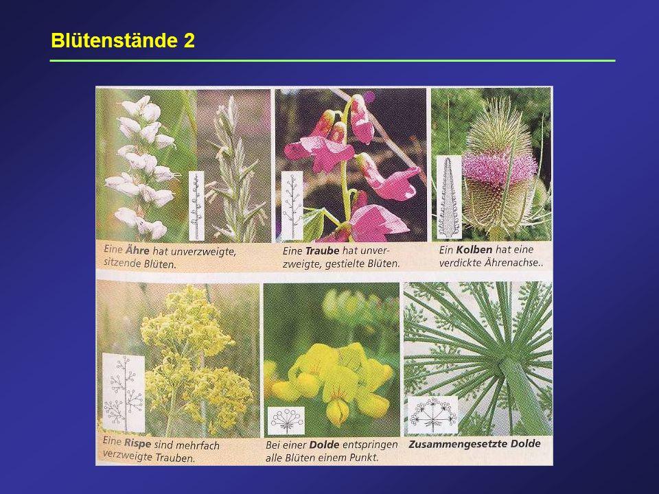 Blütenstände 2