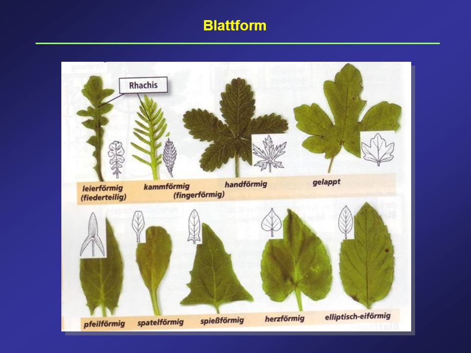 Blattform