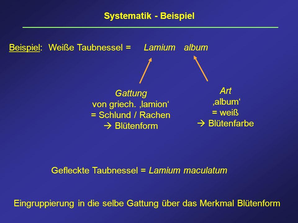 Systematik - Beispiel Beispiel: Weiße Taubnessel = Lamium album Gattung von griech. lamion = Schlund / Rachen Blütenform Art album = weiß Blütenfarbe