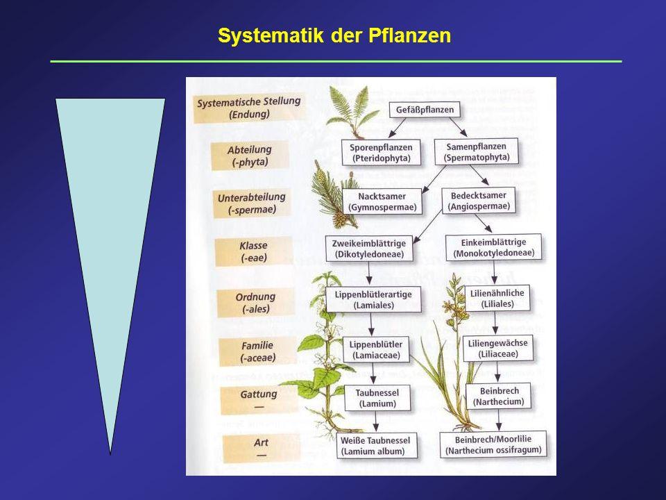 Systematik der Pflanzen