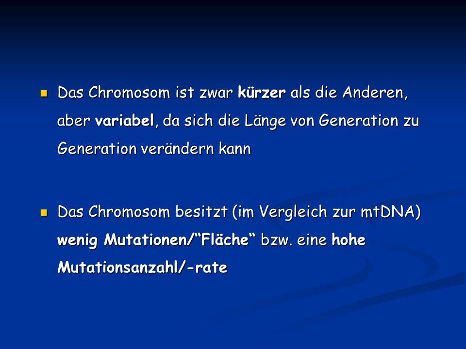 Das Chromosom ist zwar kürzer als die Anderen, aber variabel, da sich die Länge von Generation zu Generation verändern kann Das Chromosom ist zwar kür