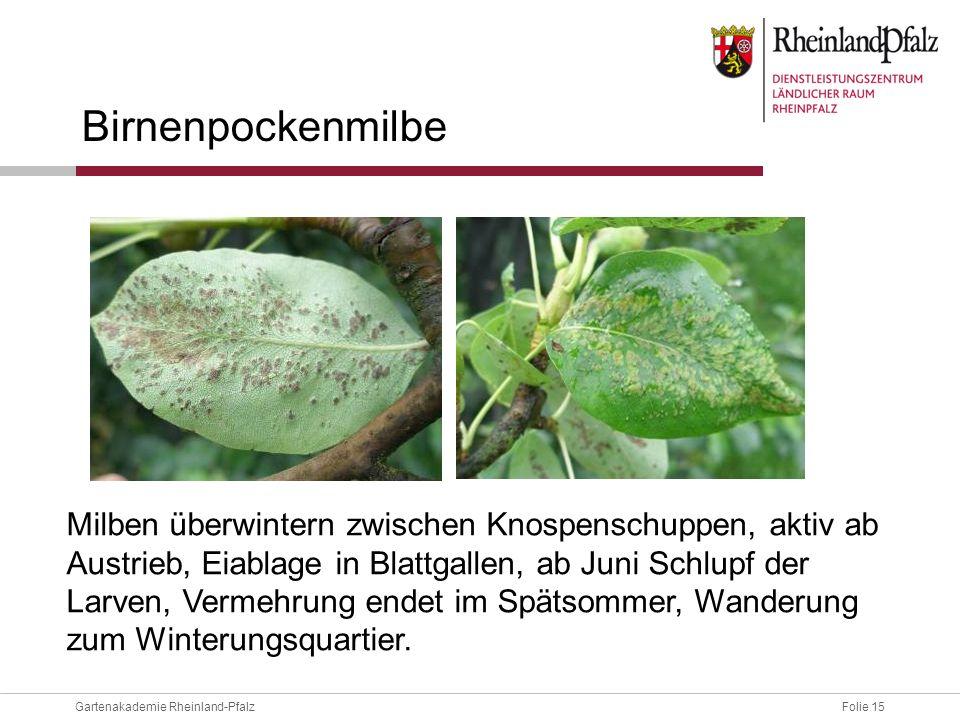 Folie 15Gartenakademie Rheinland-Pfalz Birnenpockenmilbe Milben überwintern zwischen Knospenschuppen, aktiv ab Austrieb, Eiablage in Blattgallen, ab J