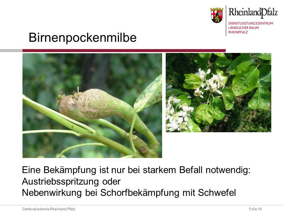 Folie 16Gartenakademie Rheinland-Pfalz Birnenpockenmilbe Eine Bekämpfung ist nur bei starkem Befall notwendig: Austriebsspritzung oder Nebenwirkung be
