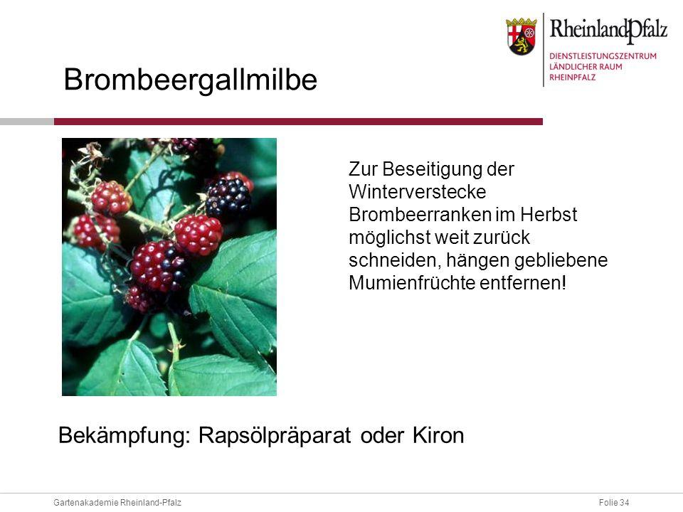 Folie 34Gartenakademie Rheinland-Pfalz Brombeergallmilbe Zur Beseitigung der Winterverstecke Brombeerranken im Herbst möglichst weit zurück schneiden,