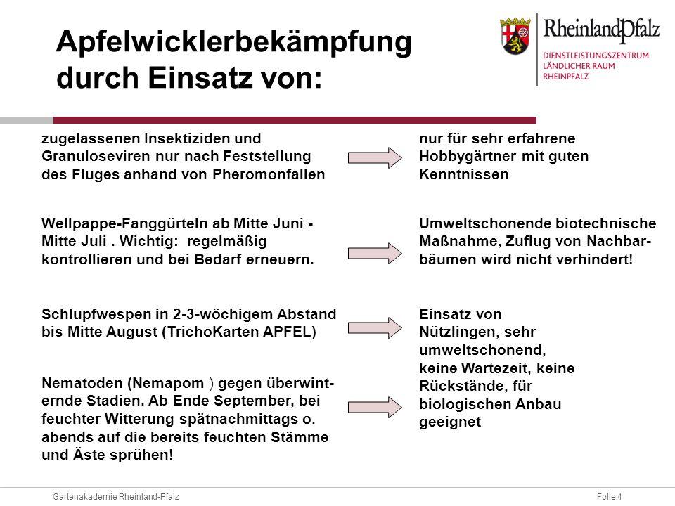 Folie 4Gartenakademie Rheinland-Pfalz Apfelwicklerbekämpfung durch Einsatz von: zugelassenen Insektiziden und Granuloseviren nur nach Feststellung des