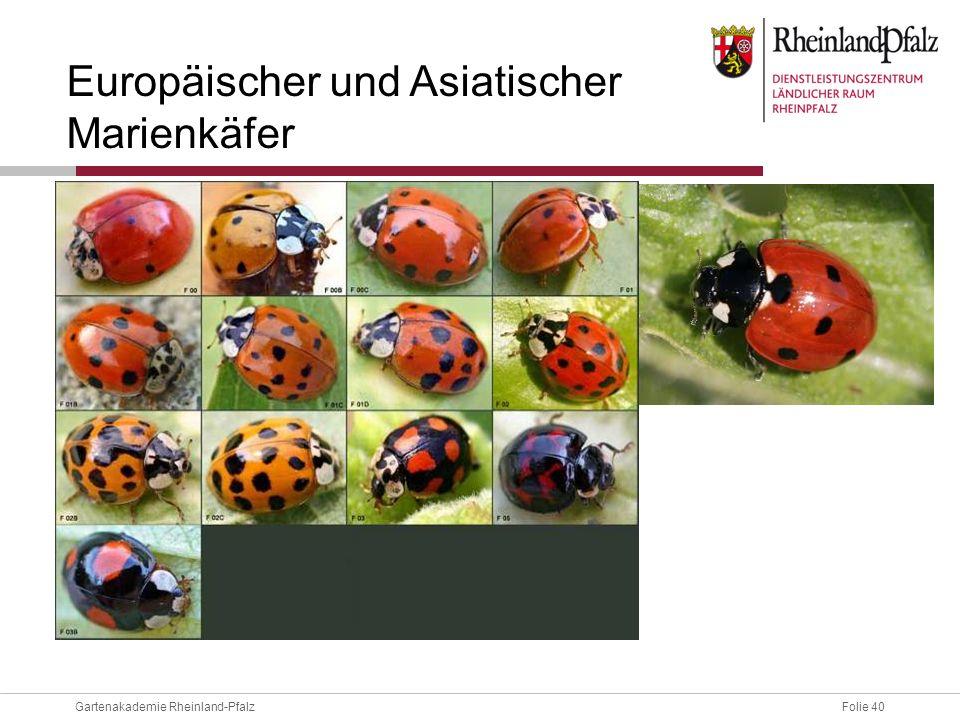 Folie 40Gartenakademie Rheinland-Pfalz Europäischer und Asiatischer Marienkäfer