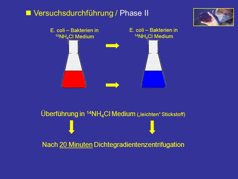 Nach 20 Minuten Dichtegradientenzentrifugation Überführung in 14 NH 4 Cl Medium (leichten Stickstoff) Versuchsdurchführung / Phase II E. coli – Bakter
