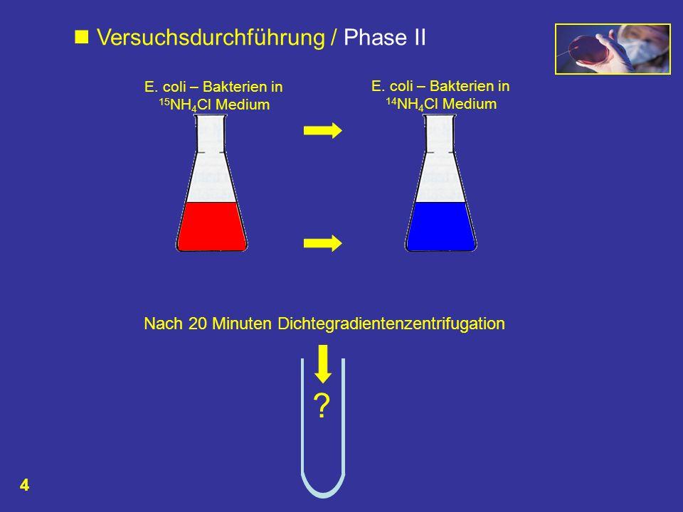 Nach 20 Minuten Dichtegradientenzentrifugation ? E. coli – Bakterien in 15 NH 4 Cl Medium E. coli – Bakterien in 14 NH 4 Cl Medium Versuchsdurchführun