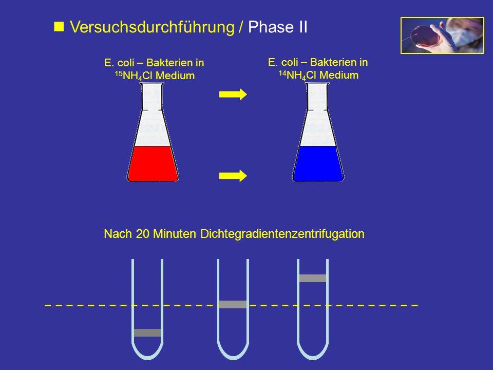 Nach 20 Minuten Dichtegradientenzentrifugation E. coli – Bakterien in 15 NH 4 Cl Medium E. coli – Bakterien in 14 NH 4 Cl Medium Versuchsdurchführung