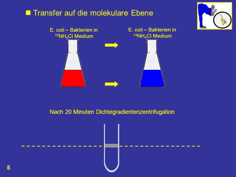 Nach 20 Minuten Dichtegradientenzentrifugation E. coli – Bakterien in 15 NH 4 Cl Medium E. coli – Bakterien in 14 NH 4 Cl Medium Transfer auf die mole