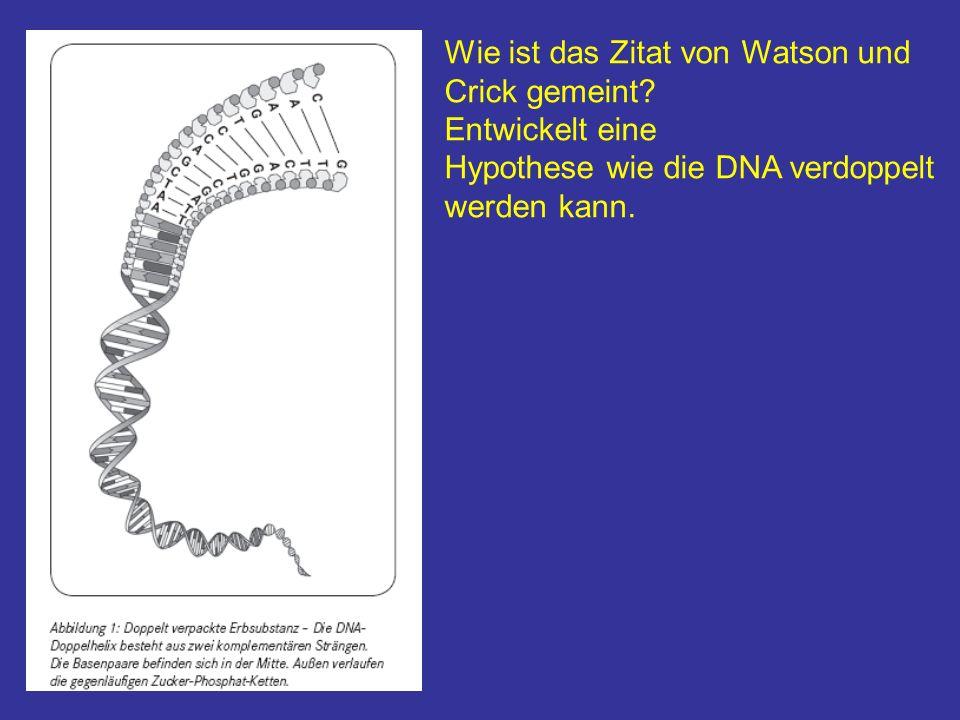 Wie ist das Zitat von Watson und Crick gemeint? Entwickelt eine Hypothese wie die DNA verdoppelt werden kann.