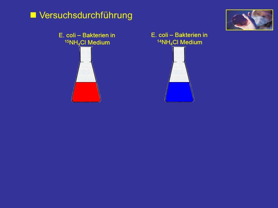 E. coli – Bakterien in 15 NH 4 Cl Medium E. coli – Bakterien in 14 NH 4 Cl Medium Versuchsdurchführung