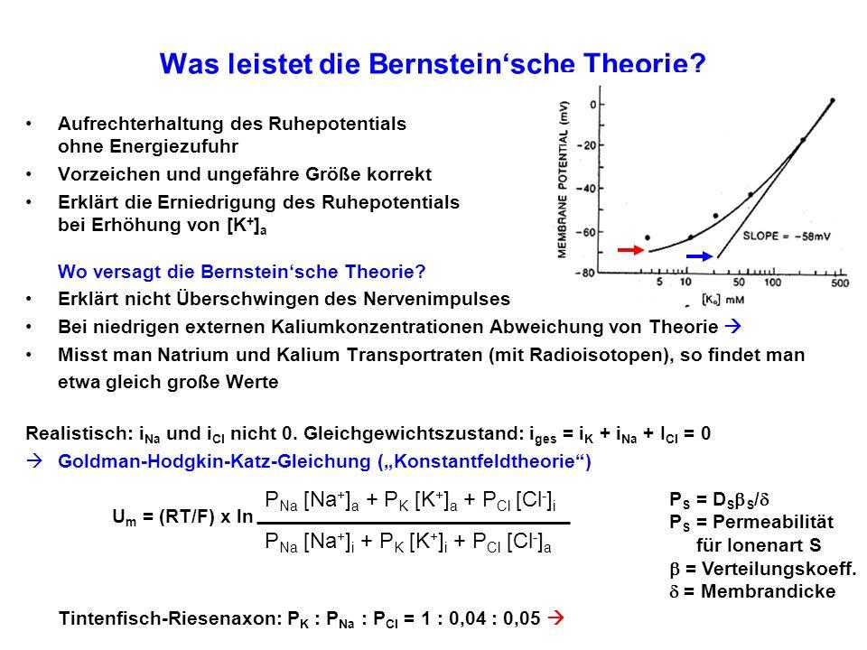 Was leistet die Bernsteinsche Theorie? Aufrechterhaltung des Ruhepotentials ohne Energiezufuhr Vorzeichen und ungefähre Größe korrekt Erklärt die Erni