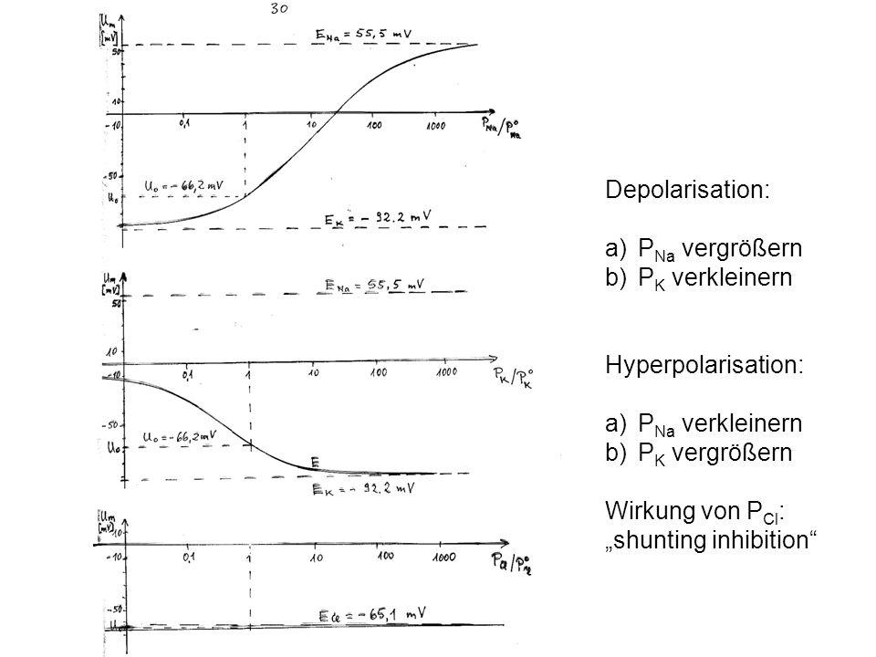Depolarisation: a)P Na vergrößern b)P K verkleinern Hyperpolarisation: a)P Na verkleinern b)P K vergrößern Wirkung von P Cl : shunting inhibition