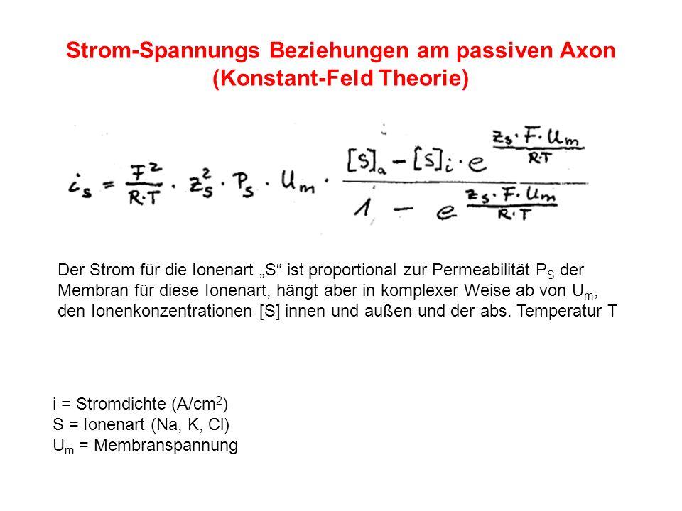 Strom-Spannungs Beziehungen am passiven Axon (Konstant-Feld Theorie) i = Stromdichte (A/cm 2 ) S = Ionenart (Na, K, Cl) U m = Membranspannung Der Stro