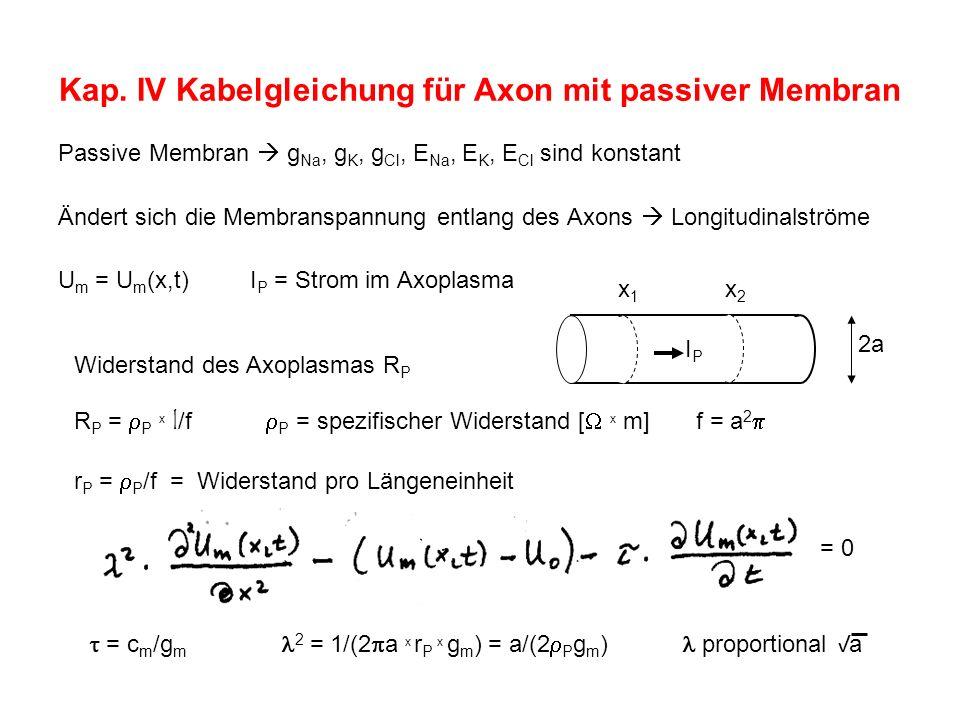 Kap. IV Kabelgleichung für Axon mit passiver Membran Passive Membran g Na, g K, g Cl, E Na, E K, E Cl sind konstant Ändert sich die Membranspannung en