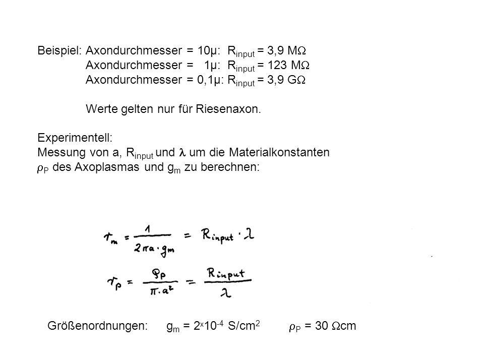 Beispiel: Axondurchmesser = 10µ: R input = 3,9 M Axondurchmesser = 1µ: R input = 123 M Axondurchmesser = 0,1µ: R input = 3,9 G Werte gelten nur für Ri
