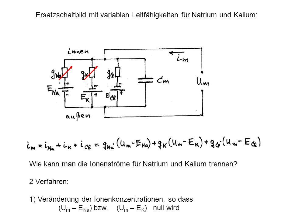Ersatzschaltbild mit variablen Leitfähigkeiten für Natrium und Kalium: Wie kann man die Ionenströme für Natrium und Kalium trennen? 2 Verfahren: 1) Ve