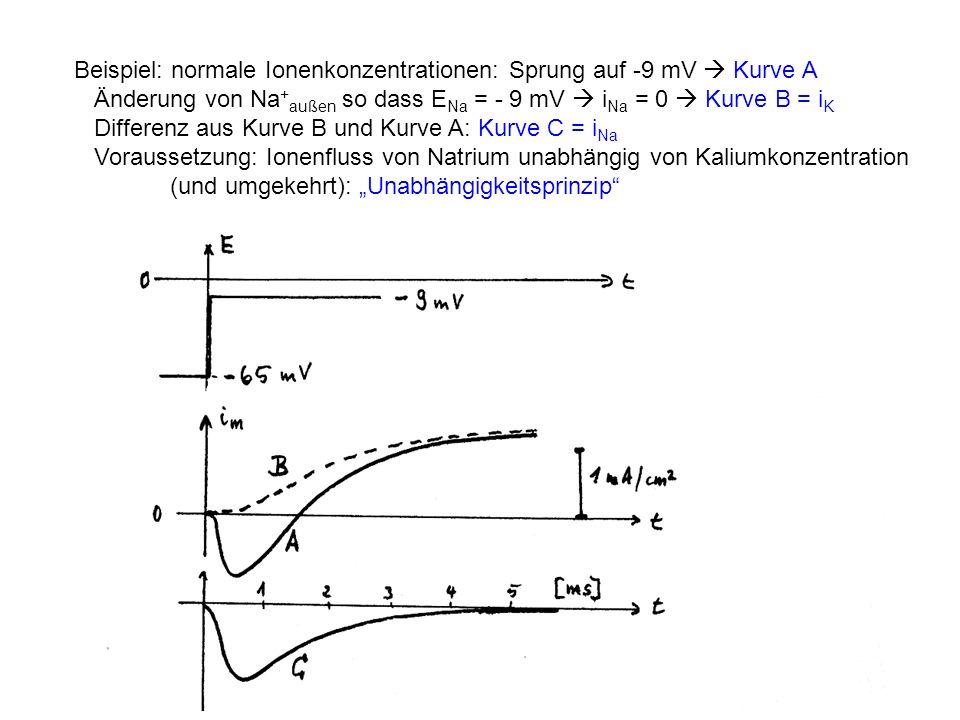 Beispiel: normale Ionenkonzentrationen: Sprung auf -9 mV Kurve A Änderung von Na + außen so dass E Na = - 9 mV i Na = 0 Kurve B = i K Differenz aus Ku