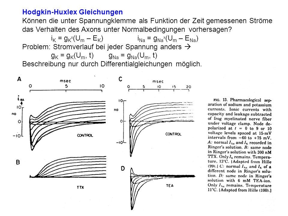 Hodgkin-Huxlex Gleichungen Können die unter Spannungklemme als Funktion der Zeit gemessenen Ströme das Verhalten des Axons unter Normalbedingungen vor