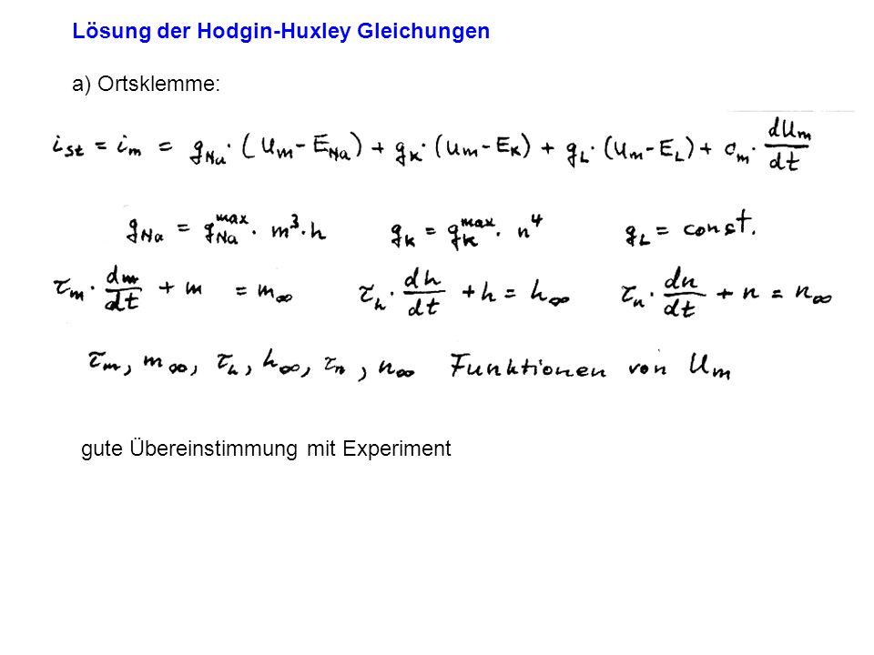 Lösung der Hodgin-Huxley Gleichungen a) Ortsklemme: gute Übereinstimmung mit Experiment