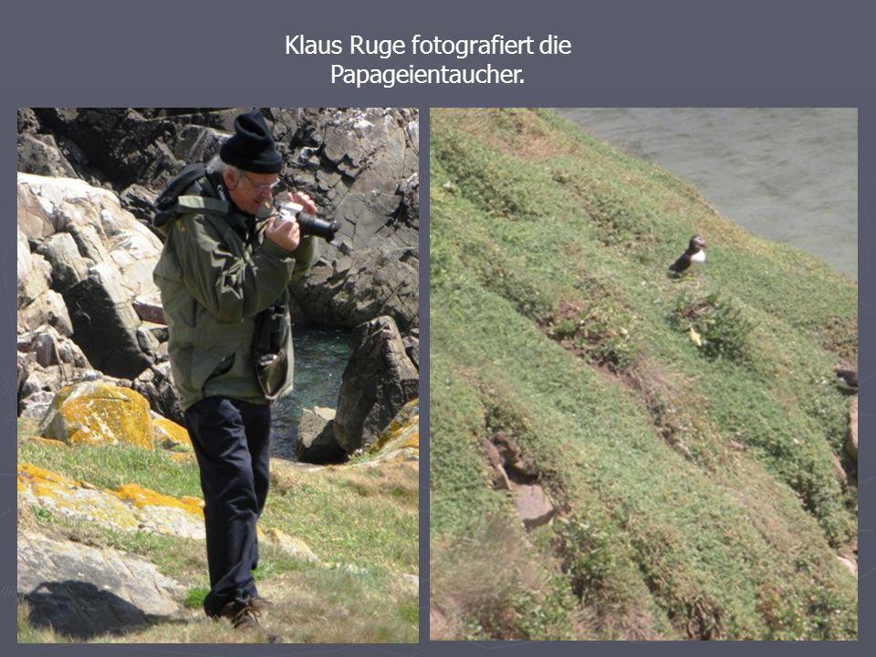 Klaus Ruge fotografiert die Papageientaucher.