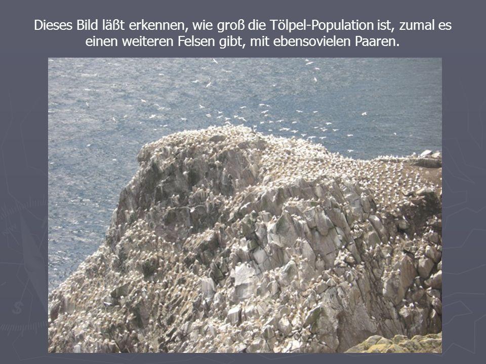 Dieses Bild läßt erkennen, wie groß die Tölpel-Population ist, zumal es einen weiteren Felsen gibt, mit ebensovielen Paaren.