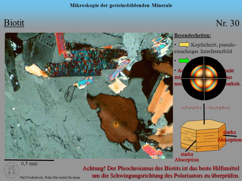 Olaf Medenbach, Ruhr-Universität Bochum Mikroskopie der gesteinsbildenden Minerale Biotit Nr. 30 0,5 mm Besonderheiten: Kopfschnitt, pseudo- einachsig