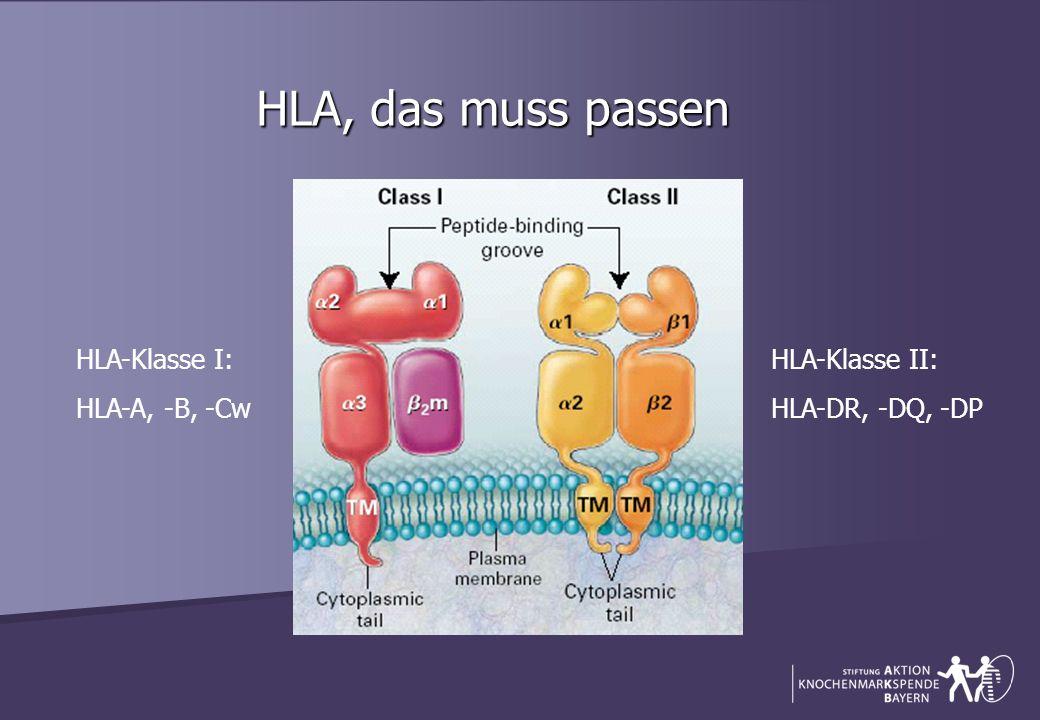 HLA, das muss passen HLA-Klasse I: HLA-A, -B, -Cw HLA-Klasse II: HLA-DR, -DQ, -DP