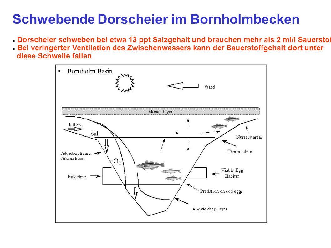 Schwebende Dorscheier im Bornholmbecken Dorscheier schweben bei etwa 13 ppt Salzgehalt und brauchen mehr als 2 ml/l Sauerstoff Bei veringerter Ventila