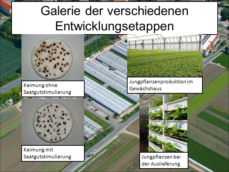 Galerie der verschiedenen Entwicklungsetappen Keimung ohne Saatgutstimulierung Keimung mit Saatgutstimulierung Jungpflanzenproduktion im Gewächshaus Jungpflanzen bei der Auslieferung
