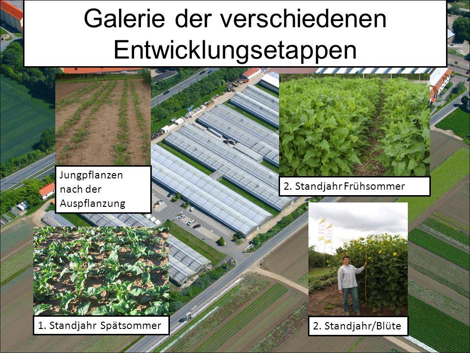 Jungpflanzen nach der Auspflanzung 1.
