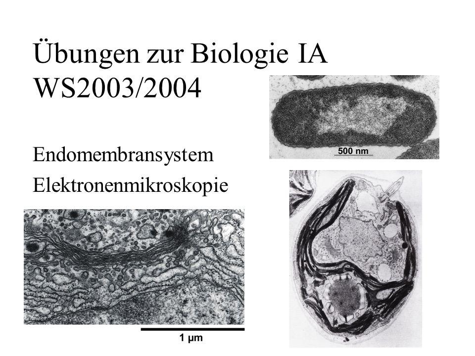 Übungen zur Biologie IA WS2003/2004 Endomembransystem Elektronenmikroskopie