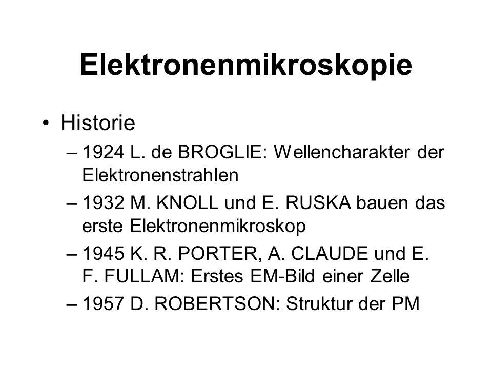 Historie –1924 L. de BROGLIE: Wellencharakter der Elektronenstrahlen –1932 M. KNOLL und E. RUSKA bauen das erste Elektronenmikroskop –1945 K. R. PORTE