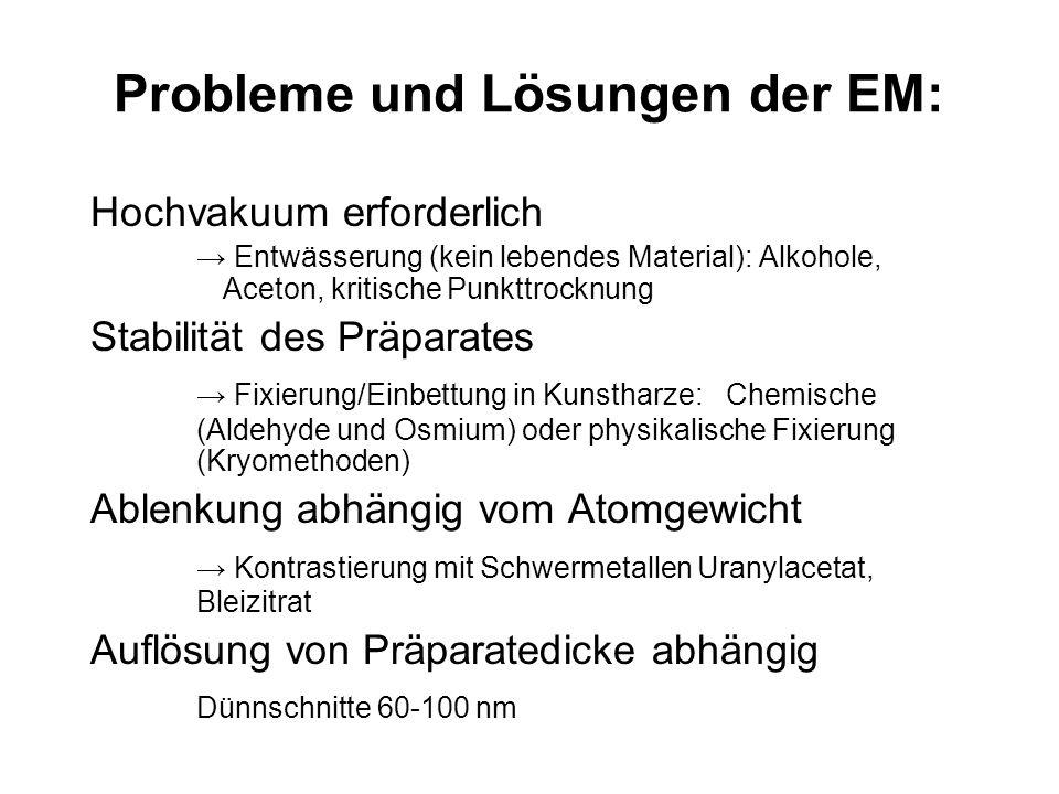 Probleme und Lösungen der EM: Hochvakuum erforderlich Entwässerung (kein lebendes Material): Alkohole, Aceton, kritische Punkttrocknung Stabilität des