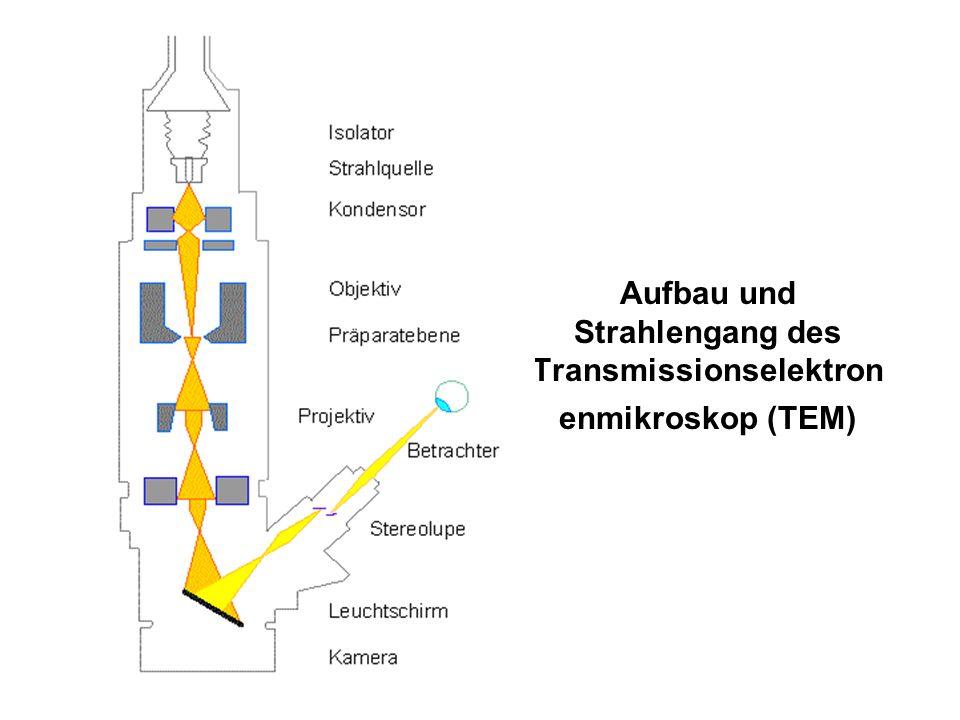 Aufbau und Strahlengang des Transmissionselektron enmikroskop (TEM)