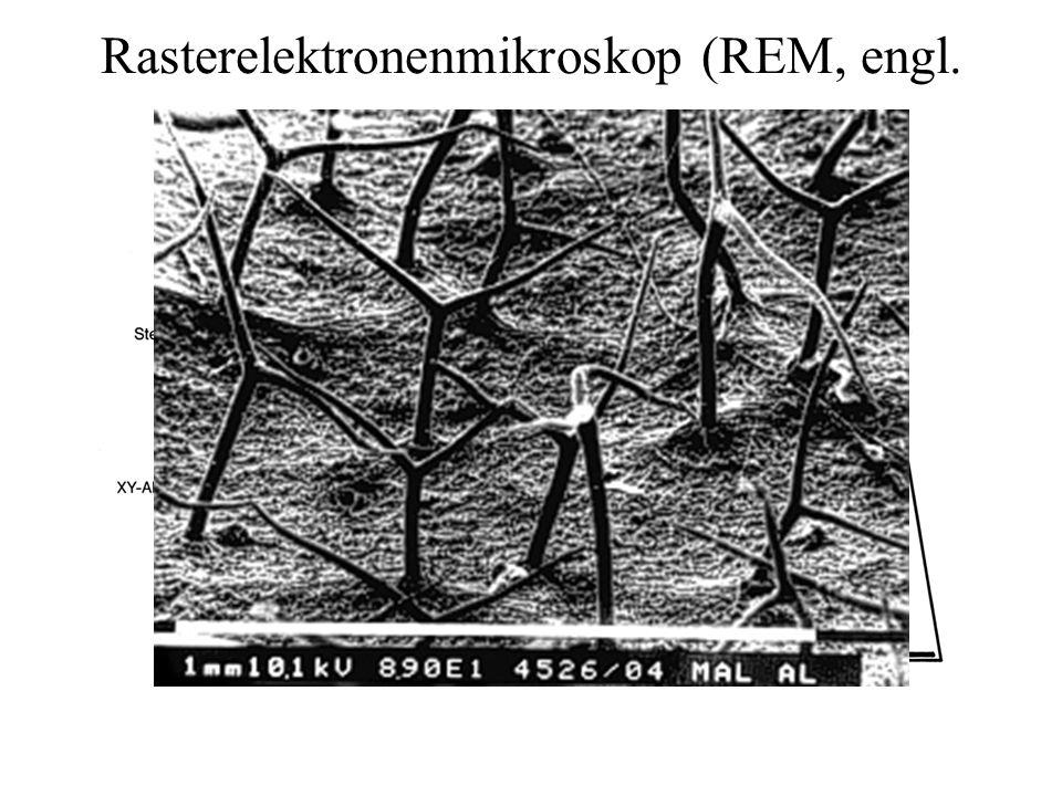 Rasterelektronenmikroskop (REM, engl. SEM)