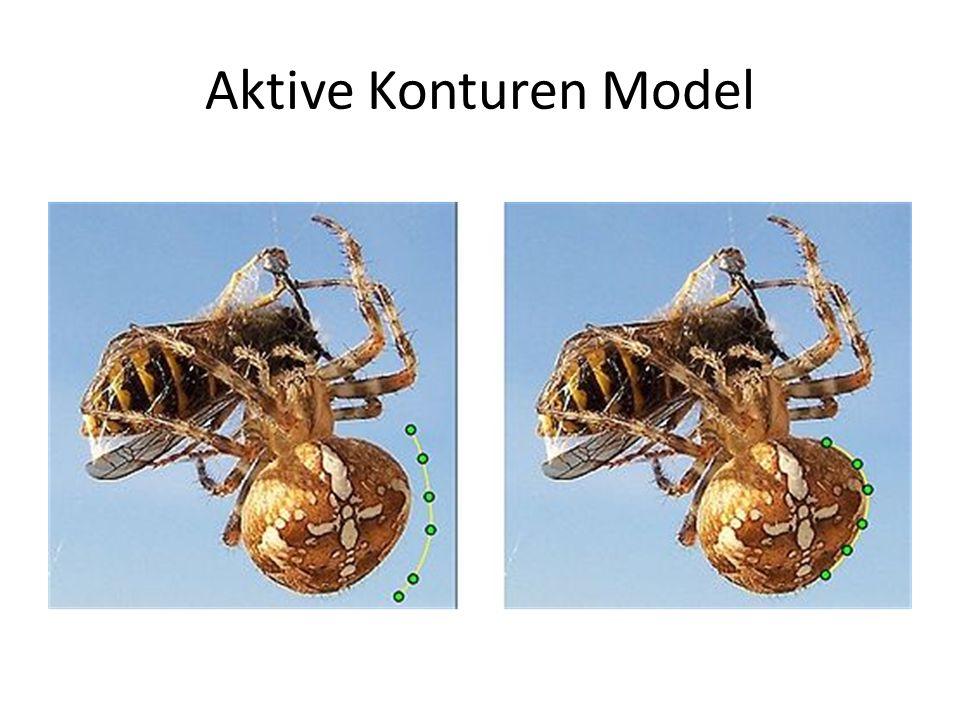 Aktive Konturen Model