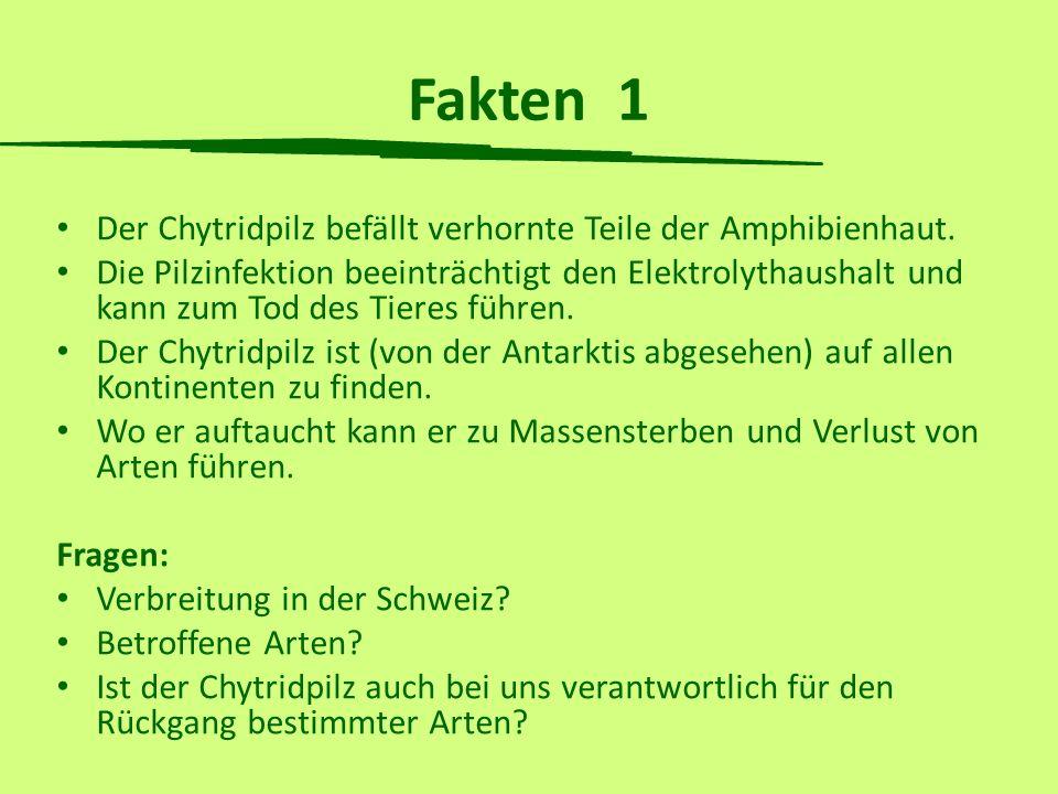 Fakten 1 Der Chytridpilz befällt verhornte Teile der Amphibienhaut. Die Pilzinfektion beeinträchtigt den Elektrolythaushalt und kann zum Tod des Tiere