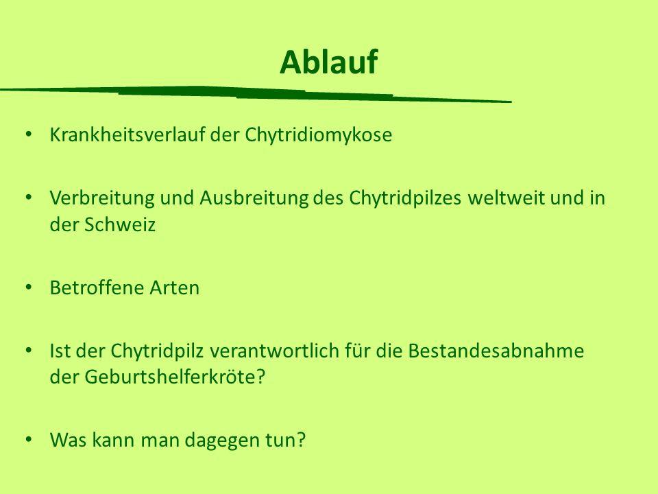 Ablauf Krankheitsverlauf der Chytridiomykose Verbreitung und Ausbreitung des Chytridpilzes weltweit und in der Schweiz Betroffene Arten Ist der Chytri