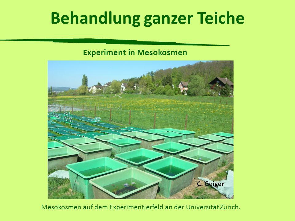 Behandlung ganzer Teiche Experiment in Mesokosmen Mesokosmen auf dem Experimentierfeld an der Universität Zürich. C. Geiger